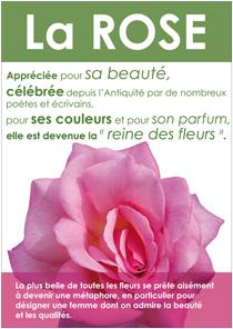 Affiche-la-rose-210x296.jpg